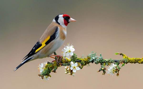"""""""Tweetwood"""" Springtime Checklist"""